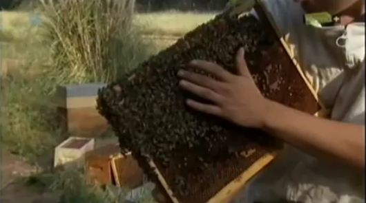 pszczoly_galeria