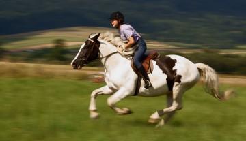 Galop na koniu