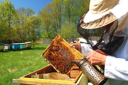 Pszczelarz w pasiece