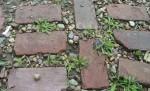 Chwasty na chodniku