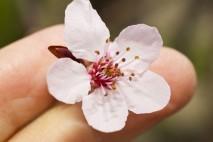 Kwiat na dłoni
