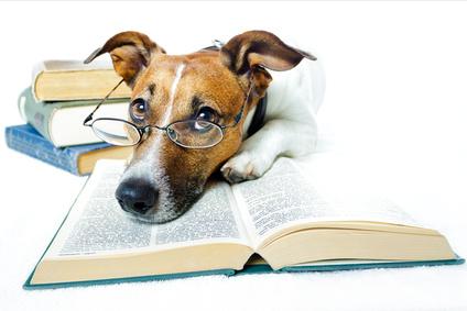 Pies czyta książkę