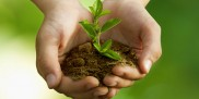 Roślina w dłoniach