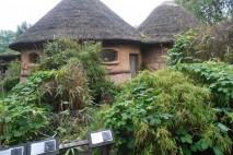 Zoo w Hanowerze