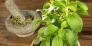Stewia (stevia)