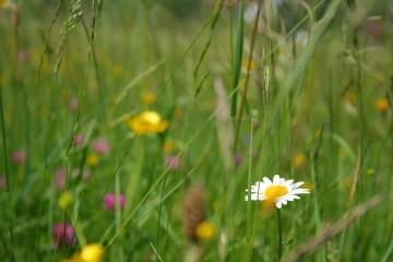 Łąka kwietna