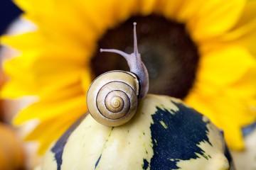 Slow life - minimalizm