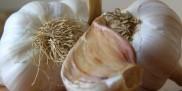Czosnek - syrop z czosnku