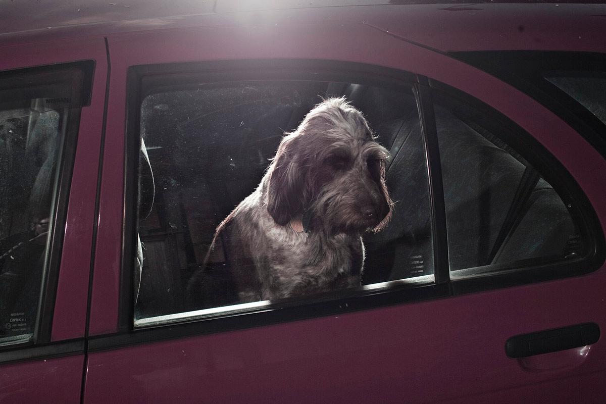 psy_w_samochodzie_martin_ Usborne (1)