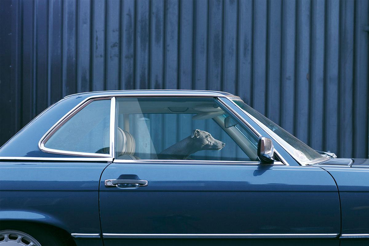psy_w_samochodzie_martin_ Usborne (5)