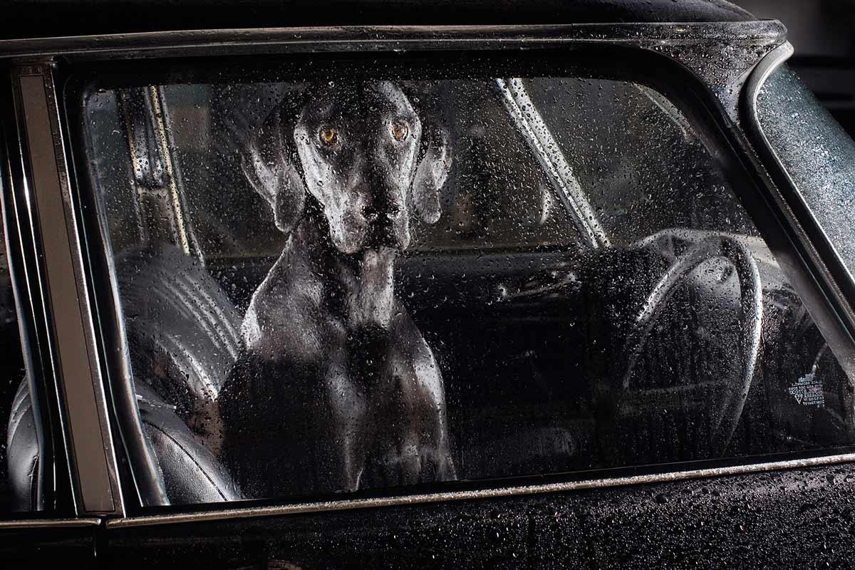 psy_w_samochodzie_martin_ Usborne (7)