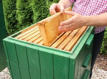 Miód - pszczelarstwo