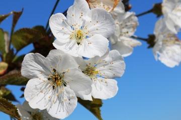 Perfumy - zapachy - kwiat