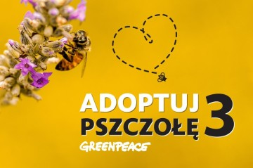 Adoptuj pszczołę