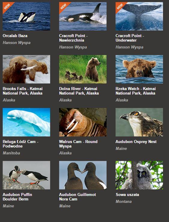 Zwierzęta - kamery