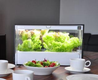 Hydroponika - uprawa hydroponiczna