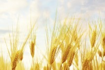 Nanozwiązki - uprawy