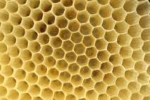 Pszczoły - plaster miodu