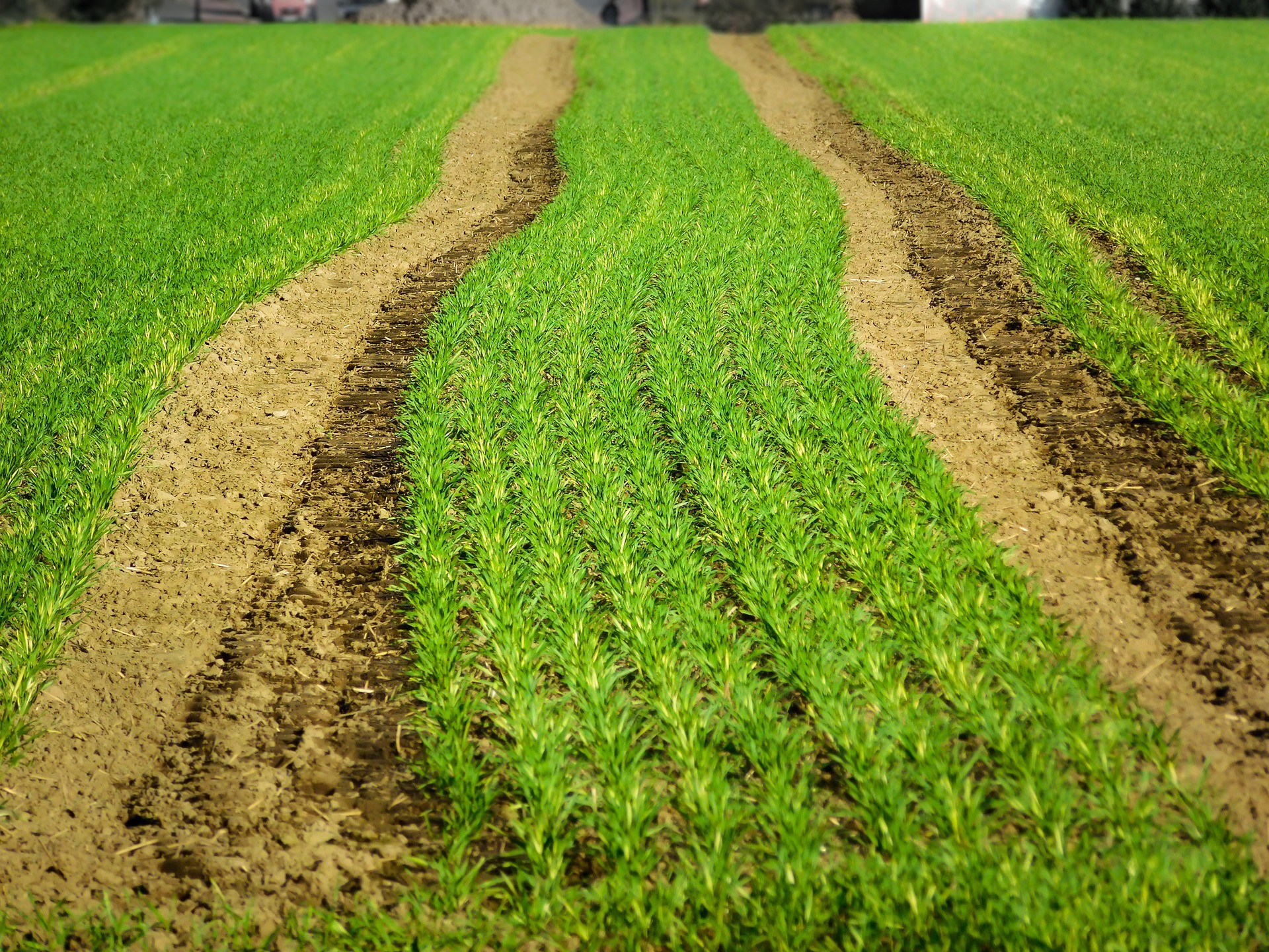 Ziemia - uprawy