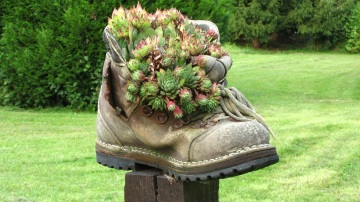 Aranżacja - ogród - kwiaty