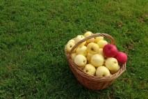 Owoce - pestycydy