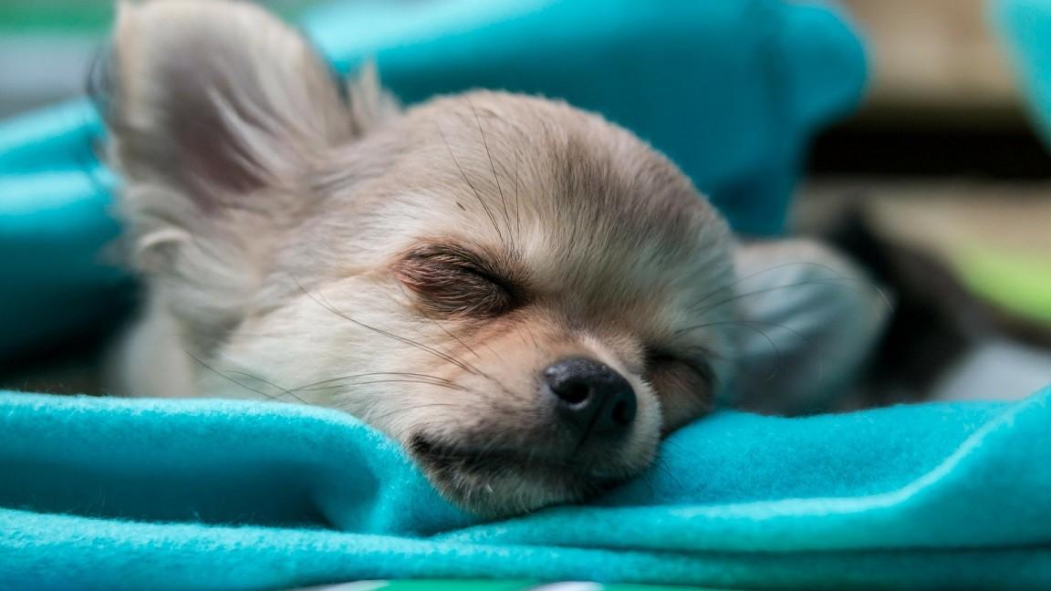 dlaczego warto spać z psem