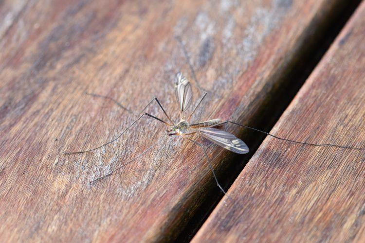 domowe sposoby na komary