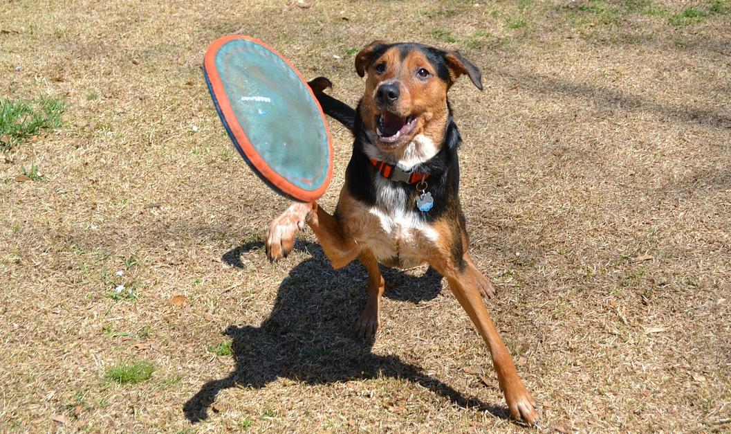 bawiący się pies